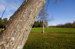 Leaning tree in city park Royalty Free Stock Photography