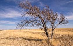 Leaning tree in rural landscape Stock Photos