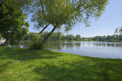 Leaning trees on lake Royalty Free Stock Images