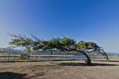 Leaning trees Royalty Free Stock Images