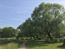 Leaning trees in the Park. With a small path royalty free stock images