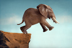 Leap of faith concept elephant jumping into a void. Off a cliff Royalty Free Stock Photo