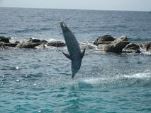 Leaping dolphin Stock Images