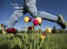 Leaping over the tulips Royalty Free Stock Image