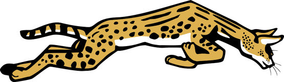 Leaping Serval Stock Image