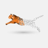 Leaping tiger from polygons Royalty Free Stock Images