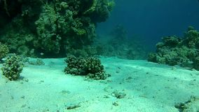 Сlear water of the red sea. Underwater coral reef red sea. The corals and fish. Transparent and warm water. Underwater life tropical fish. Beautiful exotic stock video