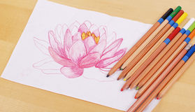 Learing To Be An Artist. A Lotus Flower For Art Royalty Free Stock Image