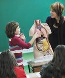 Learn biology in school Stock Photo