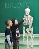 Learn biology in school Stock Photography