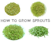 Learn how to grow sprouts at home step. Learn how to grow sprouts at home top view, Third step picture for agriculture examples , How to knowledge and learning stock image