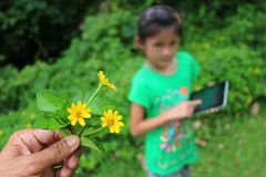 Learning biology plant outside the classroom. Royalty Free Stock Image