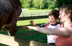 Learning about horses Royalty Free Stock Photos