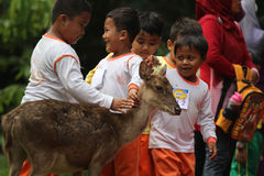 Learning Loving Animals. Children are busy playing with deer pelihataan Balekambang Park in Solo, Central Java, Indonesia. Deer are left free to attract tourists Royalty Free Stock Photo