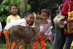 Learning Loving Animals. Children are busy playing with deer pelihataan Balekambang Park in Solo, Central Java, Indonesia. Deer are left free to attract tourists Stock Images