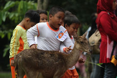 Learning Loving Animals. Children are busy playing with deer pelihataan Balekambang Park in Solo, Central Java, Indonesia. Deer are left free to attract tourists Stock Image