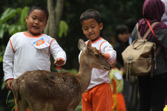 Learning Loving Animals. Children are busy playing with deer pelihataan Balekambang Park in Solo, Central Java, Indonesia. Deer are left free to attract tourists Royalty Free Stock Images