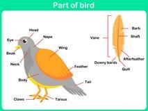 Learning Parts of bird for kids - Worksheet vector illustration