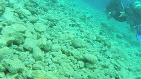 Learning to dive 1 stock video footage