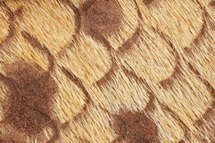 Leather. Peace of fashion  leather with hair, close up Stock Photography