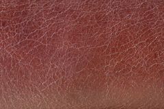 Leather background, close up. Texture, macro detail stock photography