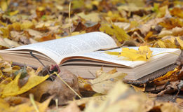 Leather book cover in fallen leaves Stock Photography