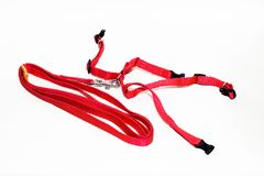 Leather cat harness on white background red. Leather cat harness on white background stock images