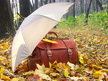 Leather chest with umbrella. Leather chest and umbrella in the forest stock image