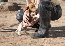 Leather-clad man and cute dog companion stock images