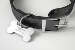 Leather Collar With Tag. A concept depicting pavlovian conditioning theory of a leather dog collar and a bone shaped identification tag showing ownership to ivan Stock Images