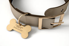 Leather Collar With Tag. A concept depicting pavlovian conditioning theory of a leather dog collar and a bone shaped identification tag showing ownership to ivan Royalty Free Stock Image