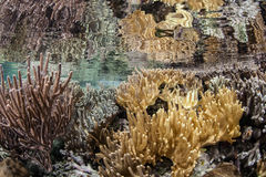 Leather Coral Colonies Under Surface stock image