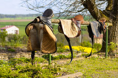 Leather cowboy saddles hanging on the railing. Removable saddles for horses in fresh air. Three saddles hanging on a fence with a forest background royalty free stock photo