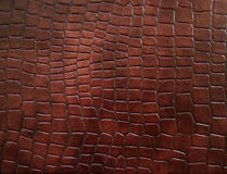 Leather with crocodile dressed texture. Royalty Free Stock Photography