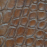 Leather with crocodile dressed texture Stock Photos