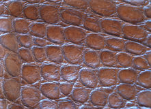Leather with crocodile dressed texture Stock Photography