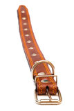 Leather dog collar Royalty Free Stock Photography