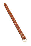 Leather dog collar Stock Image