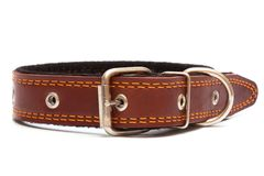 Leather dog collar Royalty Free Stock Images