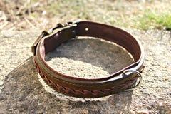 Leather dog collar royalty free stock photos
