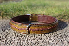 Leather dog collar Stock Images