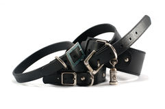 Leather dog collars on white background Royalty Free Stock Images