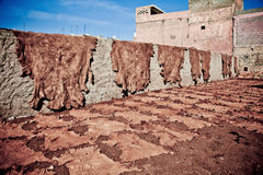 Leather drying in the sun. Various leathers drying in the sun, Assilah, Morroco Stock Photos
