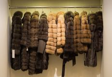 Fur coats on hangers in leather and fur shop. stock image