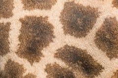 Leather giraffe leather giraffe textured skin Royalty Free Stock Photos