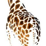Leather giraffe Royalty Free Stock Image