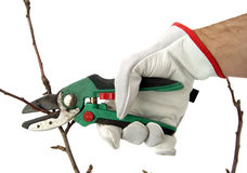 Secateurs pruning Royalty Free Stock Photography