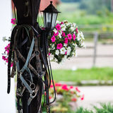 Leather horse bridles Royalty Free Stock Images