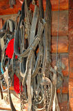 Leather horse bridles on wall Royalty Free Stock Photo