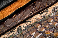 Leather. Macro photographed in studio environment Royalty Free Stock Photo